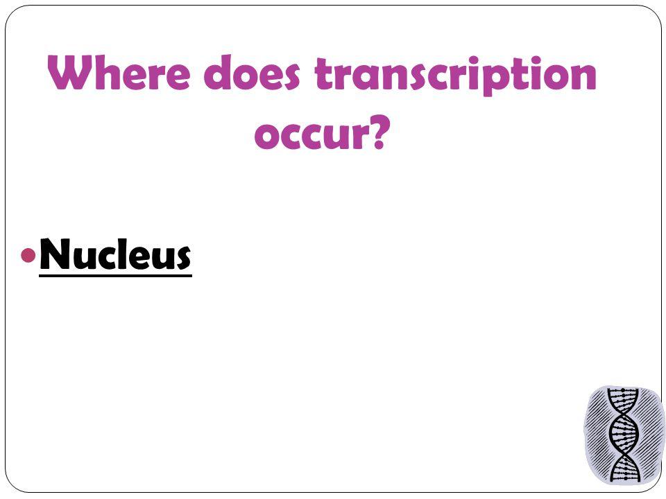 Where does transcription occur Nucleus