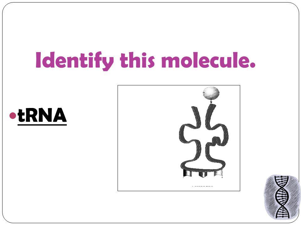 Identify this molecule. tRNA