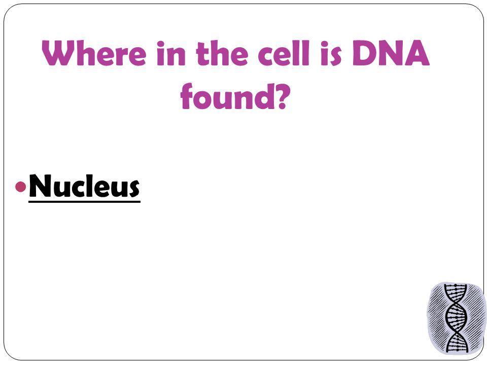 Where in the cell is DNA found Nucleus