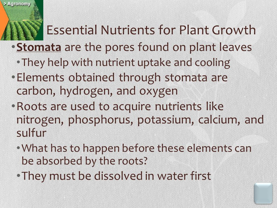 Essential Nutrients for Plant Growth Stomata are the pores found on plant leaves They help with nutrient uptake and cooling Elements obtained through stomata are carbon, hydrogen, and oxygen Roots are used to acquire nutrients like nitrogen, phosphorus, potassium, calcium, and sulfur What has to happen before these elements can be absorbed by the roots.