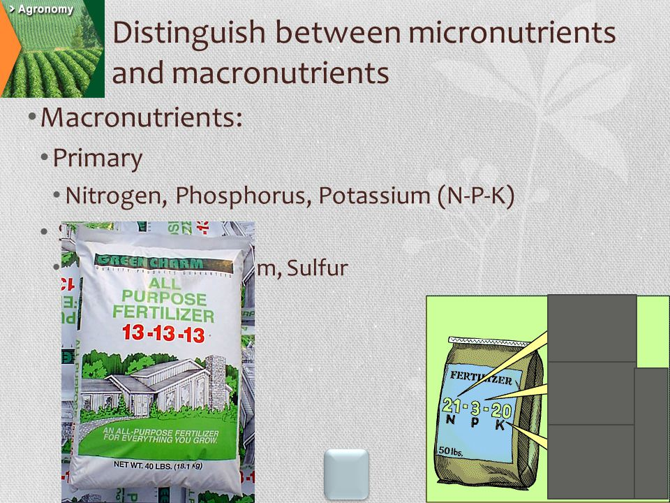 Micronutrients The remaining 10 elements Distinguish between micronutrients and macronutrients