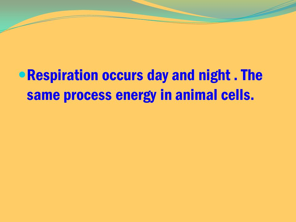 Respiration occurs day and night. The same process energy in animal cells.