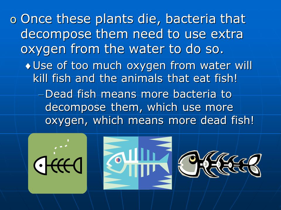 o Once these plants die, bacteria that decompose them need to use extra oxygen from the water to do so. Use of too much oxygen from water will kill f