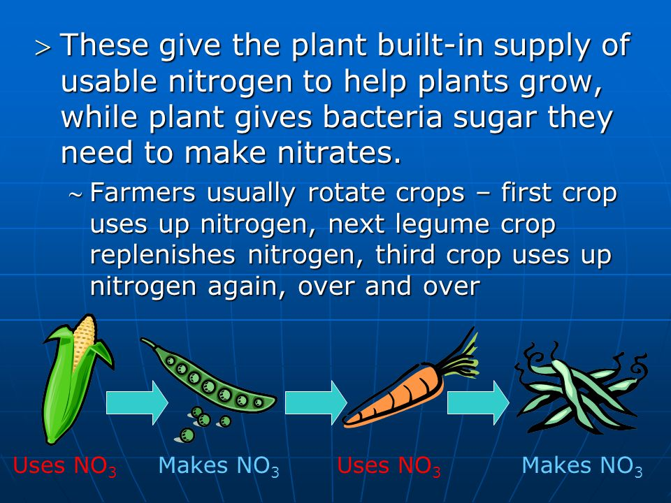 These give the plant built-in supply of usable nitrogen to help plants grow, while plant gives bacteria sugar they need to make nitrates.
