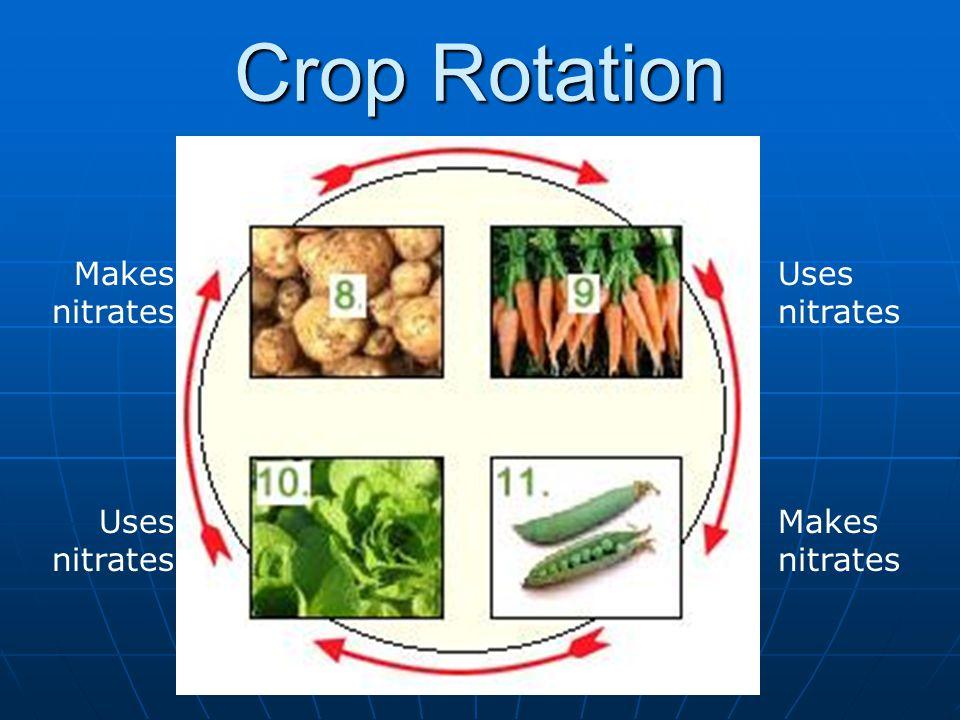 Crop Rotation Uses nitrates Makes nitrates Uses nitrates Makes nitrates
