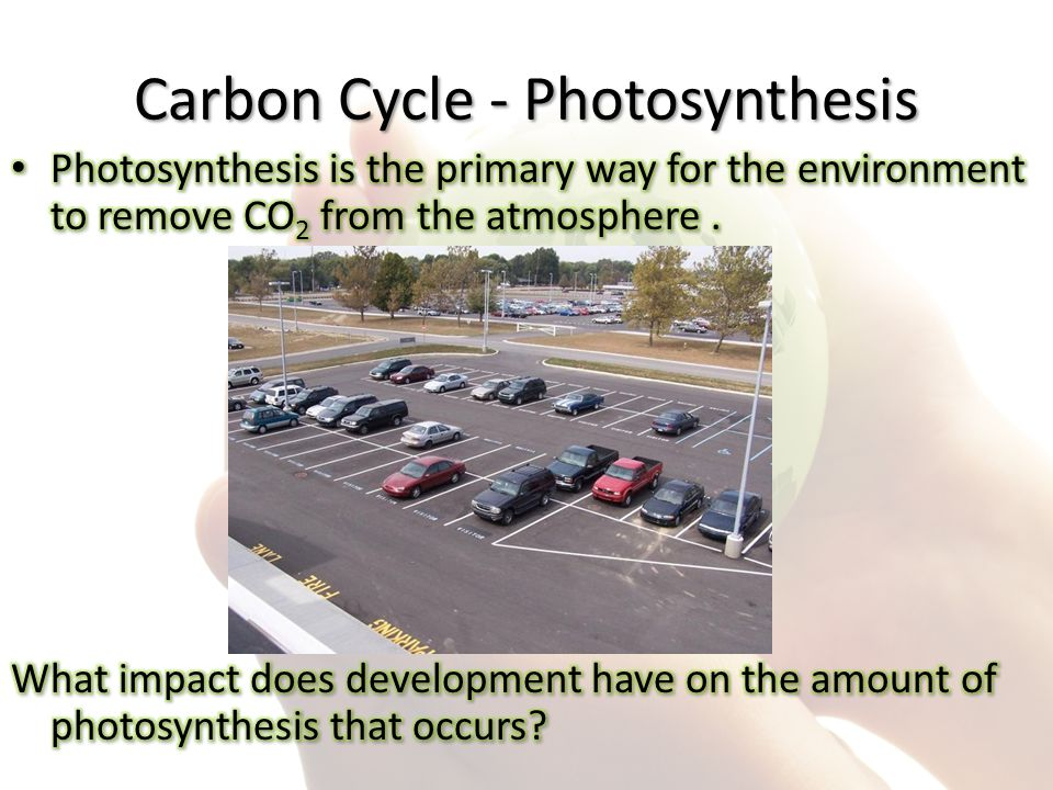 Carbon Cycle - Photosynthesis