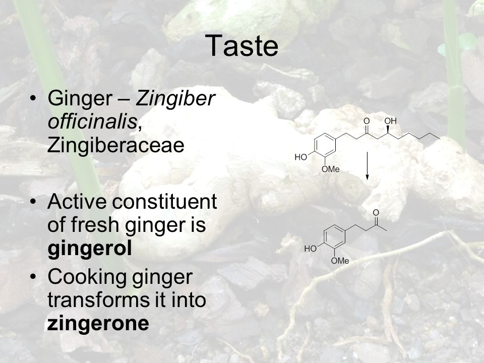 Taste Ginger – Zingiber officinalis, Zingiberaceae Active constituent of fresh ginger is gingerol Cooking ginger transforms it into zingerone