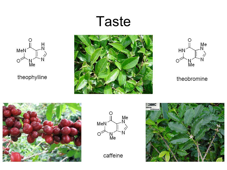caffeine theophylline theobromine