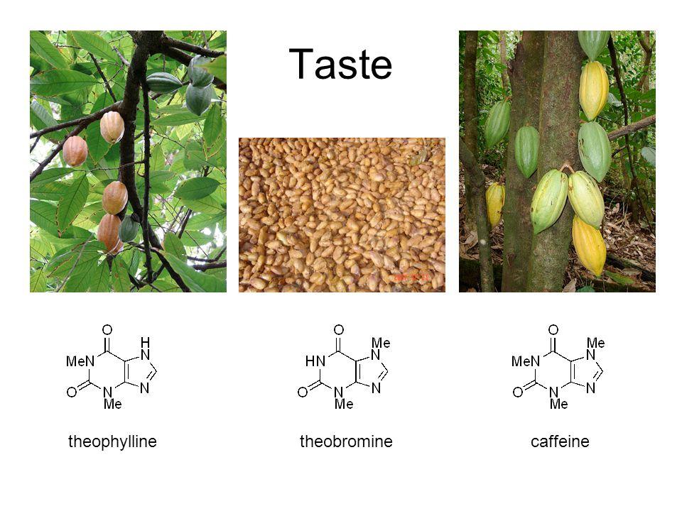 Taste theobrominecaffeinetheophylline