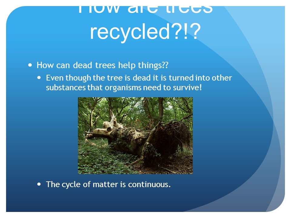 How are trees recycled?!? How can dead trees help things?? Even though the tree is dead it is turned into other substances that organisms need to surv