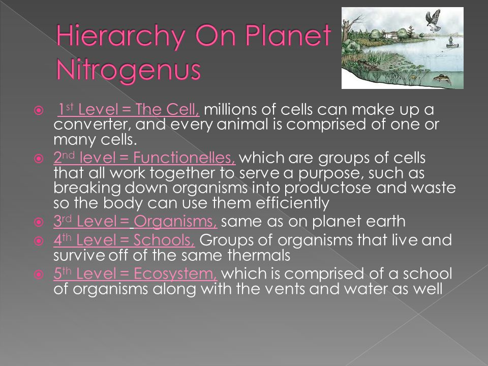  1 st Level = The Cell, millions of cells can make up a converter, and every animal is comprised of one or many cells.