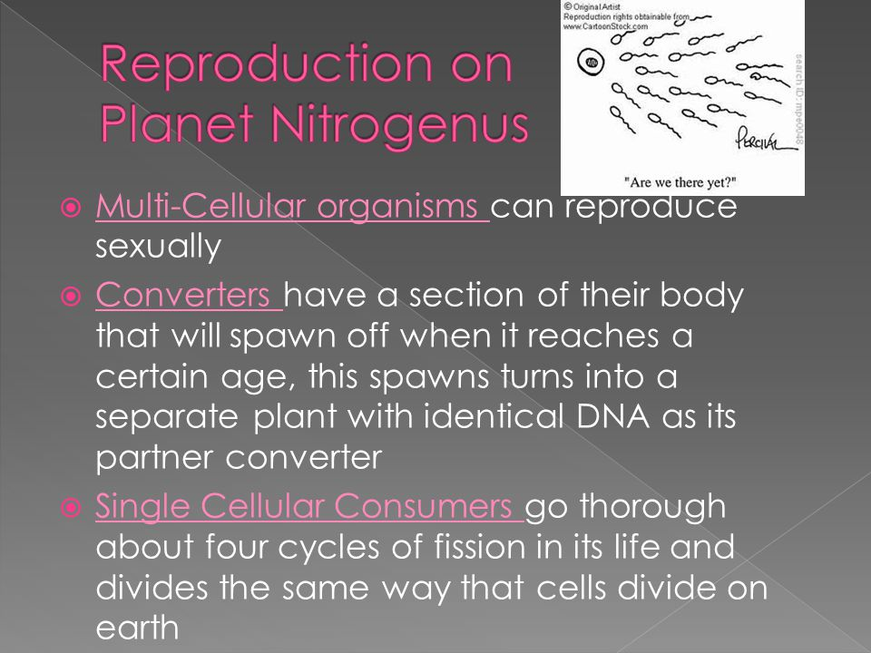  Multi-Cellular organisms can reproduce sexually  Converters have a section of their body that will spawn off when it reaches a certain age, this spawns turns into a separate plant with identical DNA as its partner converter  Single Cellular Consumers go thorough about four cycles of fission in its life and divides the same way that cells divide on earth