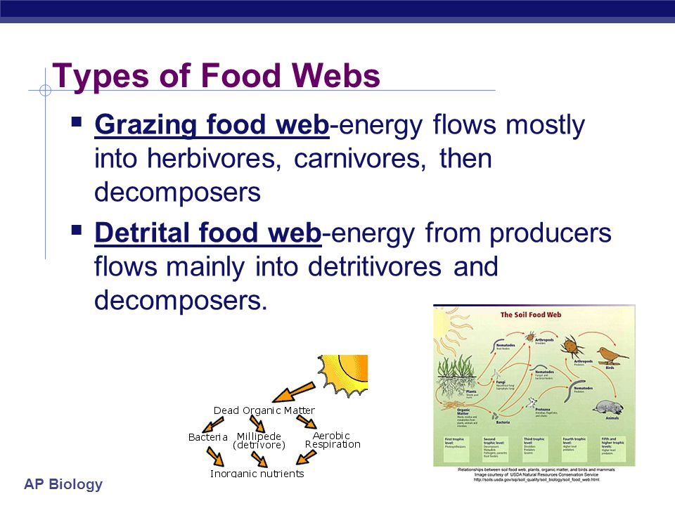 AP Biology Food webs  Food chains are linked together into food webs  Who eats whom.