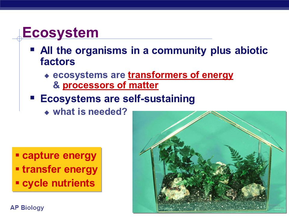 AP Biology Ecological pyramid  Loss of energy between levels of food chain 1,000,000,000 100,000 100 1 sun