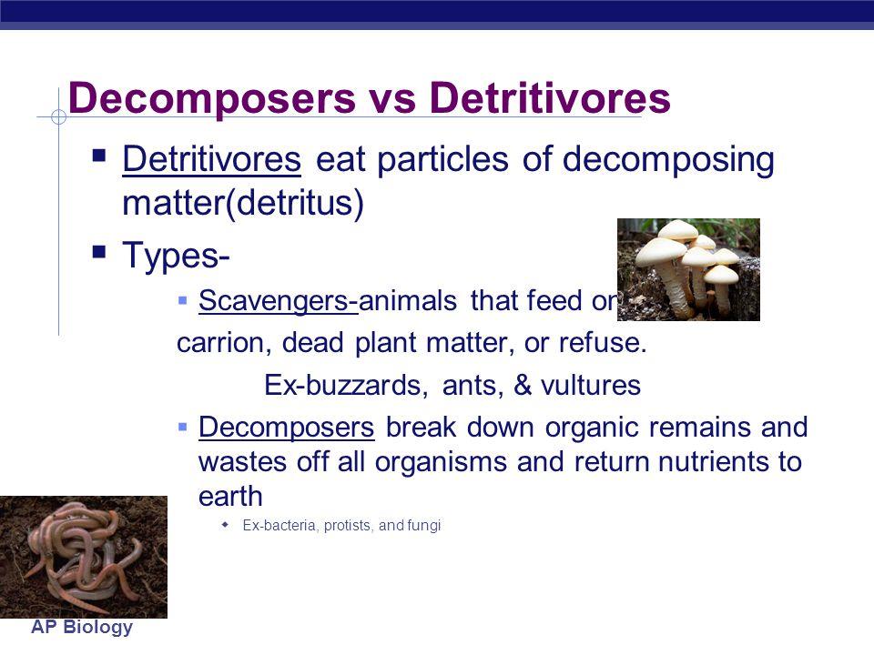 AP Biology Decomposers vs Detritivores  Detritivores eat particles of decomposing matter(detritus)  Types-  Scavengers-animals that feed on carrion, dead plant matter, or refuse.