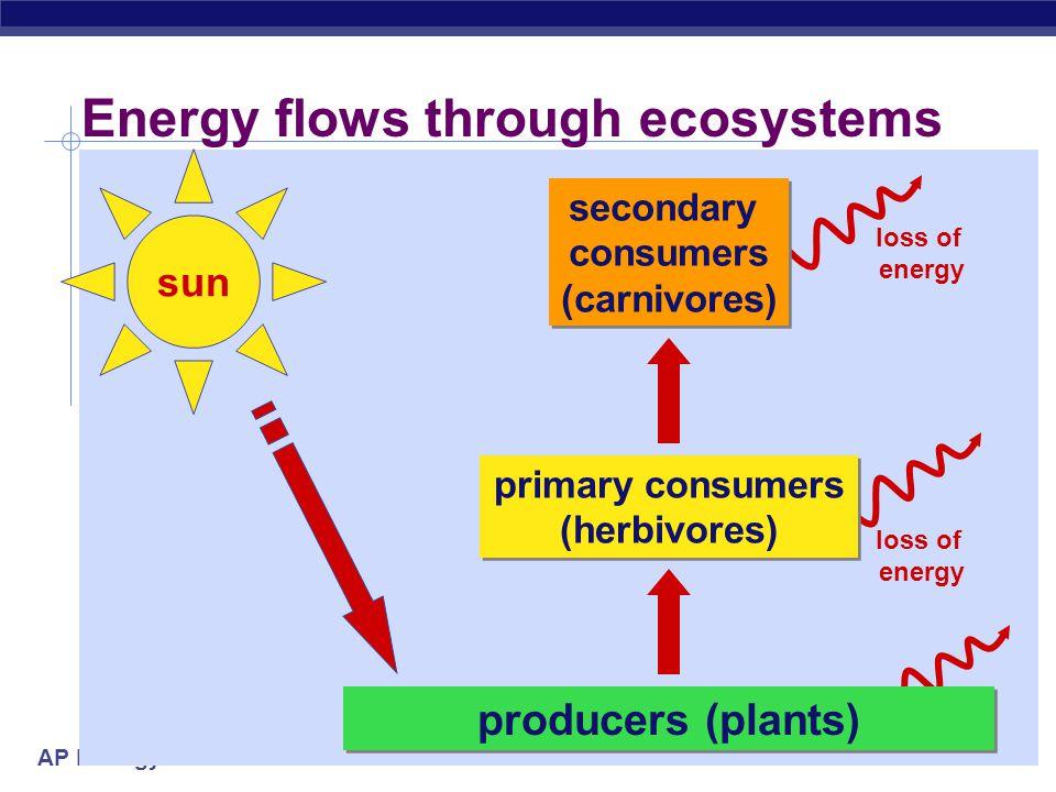 AP Biology Energy flows through ecosystems sun producers (plants) loss of energy secondary consumers (carnivores) secondary consumers (carnivores) primary consumers (herbivores) primary consumers (herbivores)