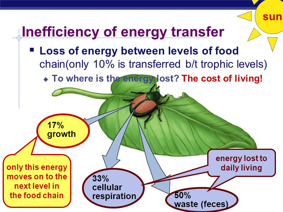 AP Biology Energy flows through ecosystems sun producers (plants) loss of energy secondary consumers (carnivores) secondary consumers (carnivores) primary consumers (herbivores) primary consumers (herbivores)