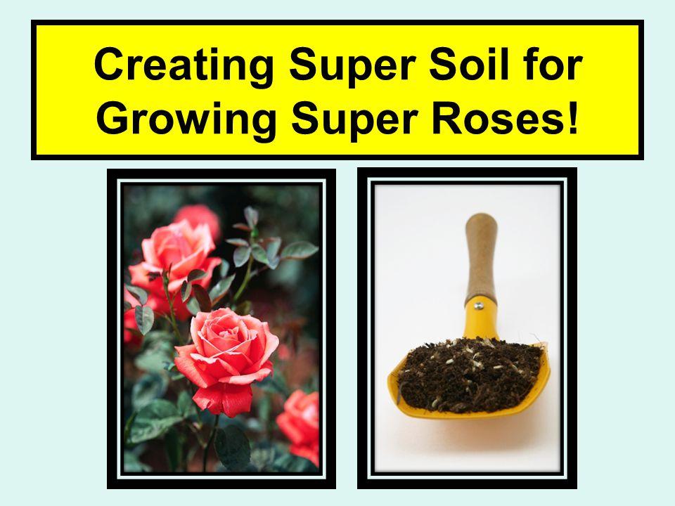 Creating Super Soil for Growing Super Roses!