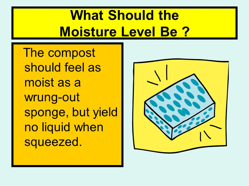 What Should the Moisture Level Be .