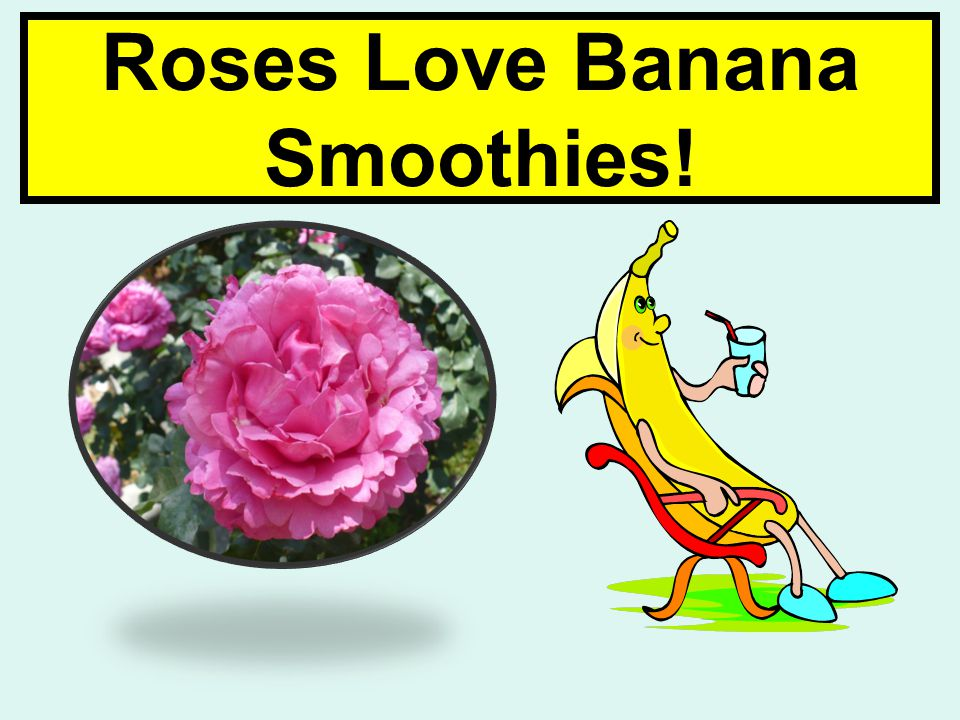 Roses Love Banana Smoothies!