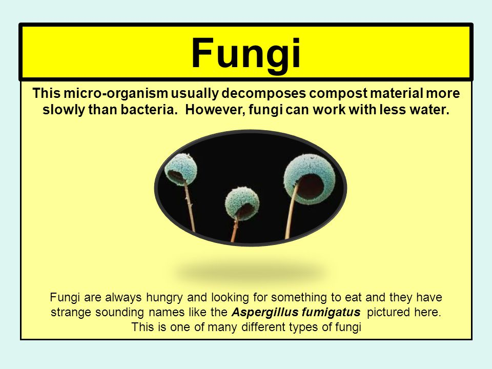 Fungi This micro-organism usually decomposes compost material more slowly than bacteria.