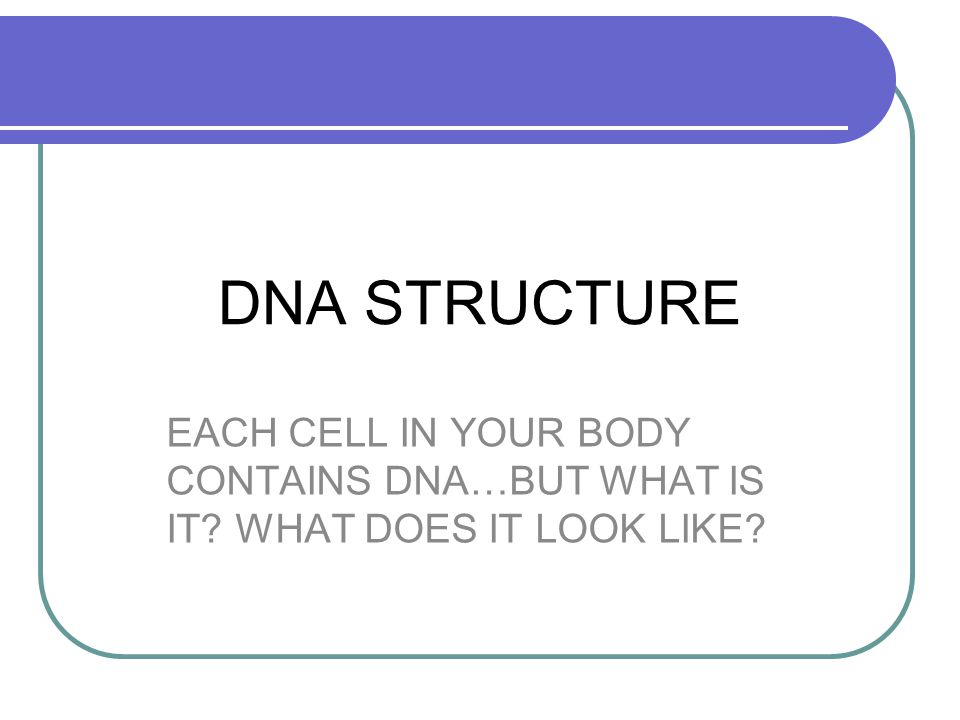 DNA STRUCTURE EACH CELL IN YOUR BODY CONTAINS DNA…BUT WHAT IS IT? WHAT DOES IT LOOK LIKE?
