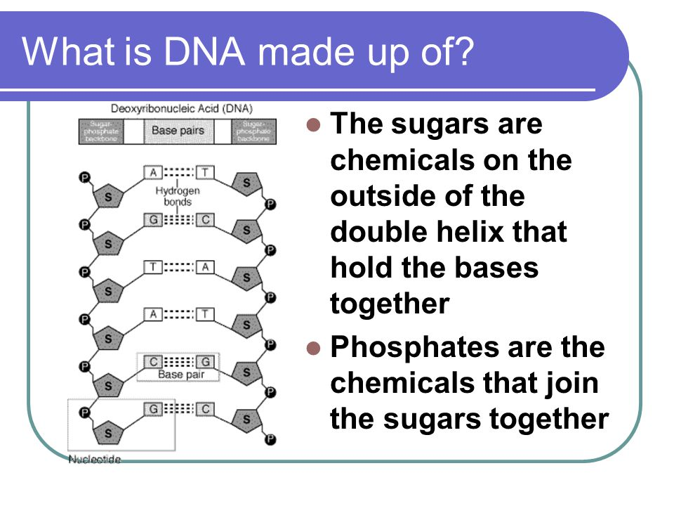 What is DNA made up of? The sugars are chemicals on the outside of the double helix that hold the bases together Phosphates are the chemicals that joi
