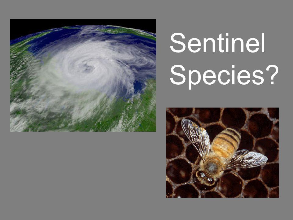 Sentinel Species?