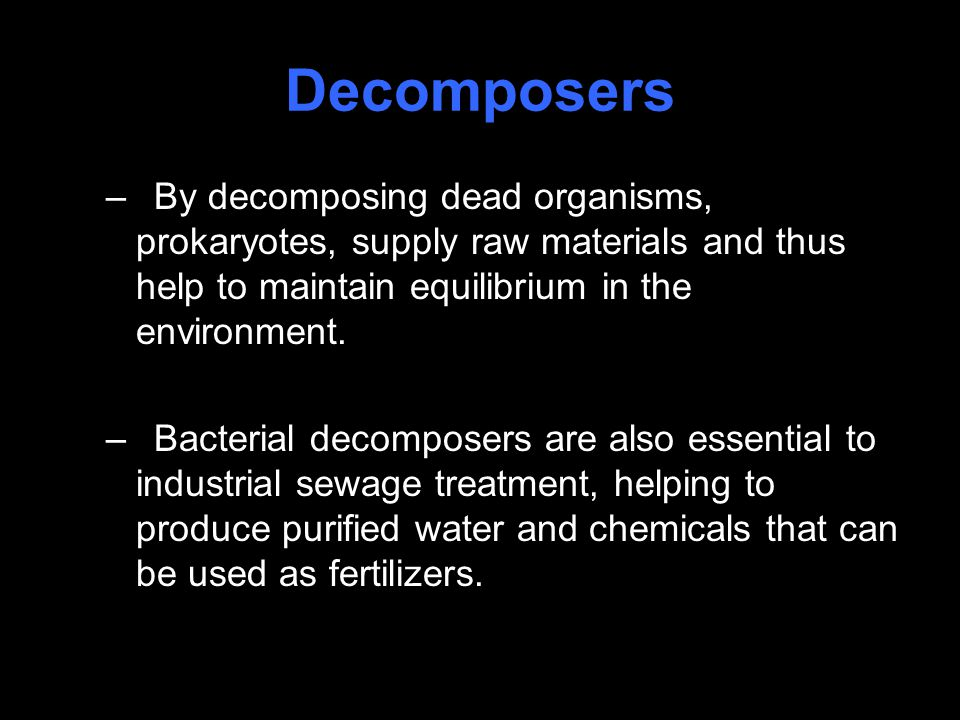 Decomposers –By decomposing dead organisms, prokaryotes, supply raw materials and thus help to maintain equilibrium in the environment.