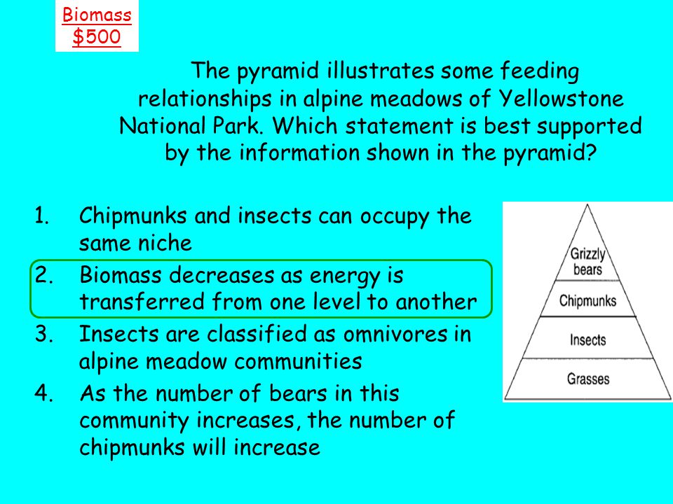 The pyramid illustrates some feeding relationships in alpine meadows of Yellowstone National Park. Which statement is best supported by the informatio