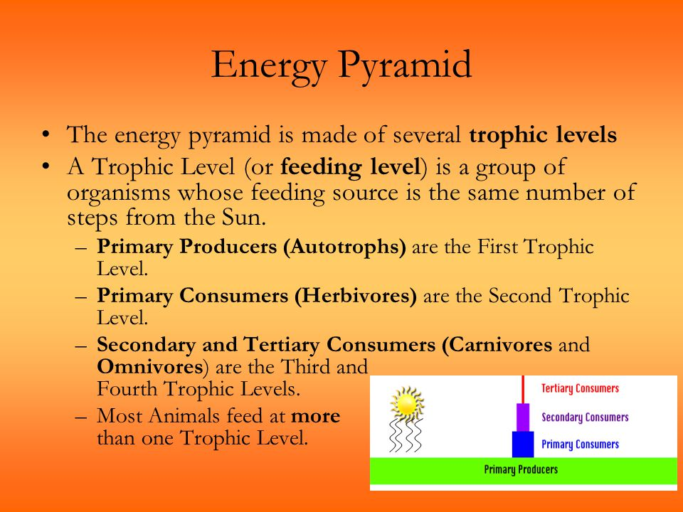 Energy Pyramid The energy pyramid is made of several trophic levels A Trophic Level (or feeding level) is a group of organisms whose feeding source is
