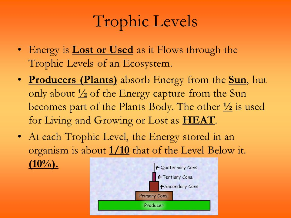 Trophic Levels Energy is Lost or Used as it Flows through the Trophic Levels of an Ecosystem. Producers (Plants) absorb Energy from the Sun, but only