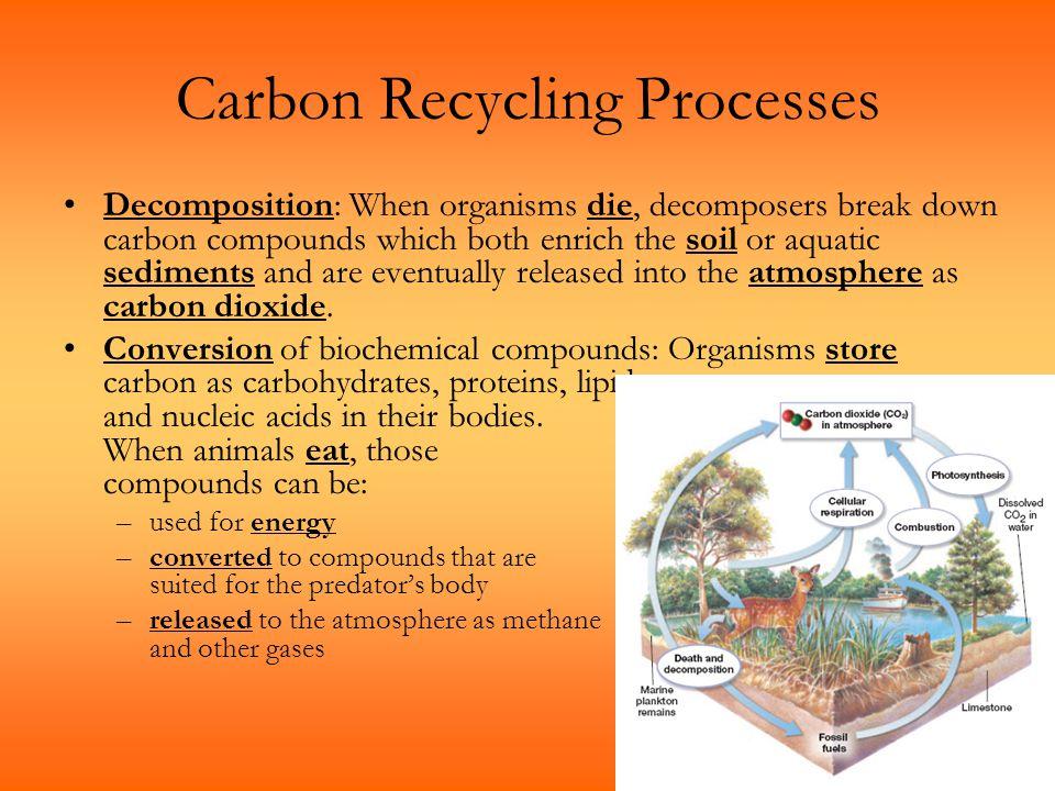 Carbon Recycling Processes Decomposition: When organisms die, decomposers break down carbon compounds which both enrich the soil or aquatic sediments