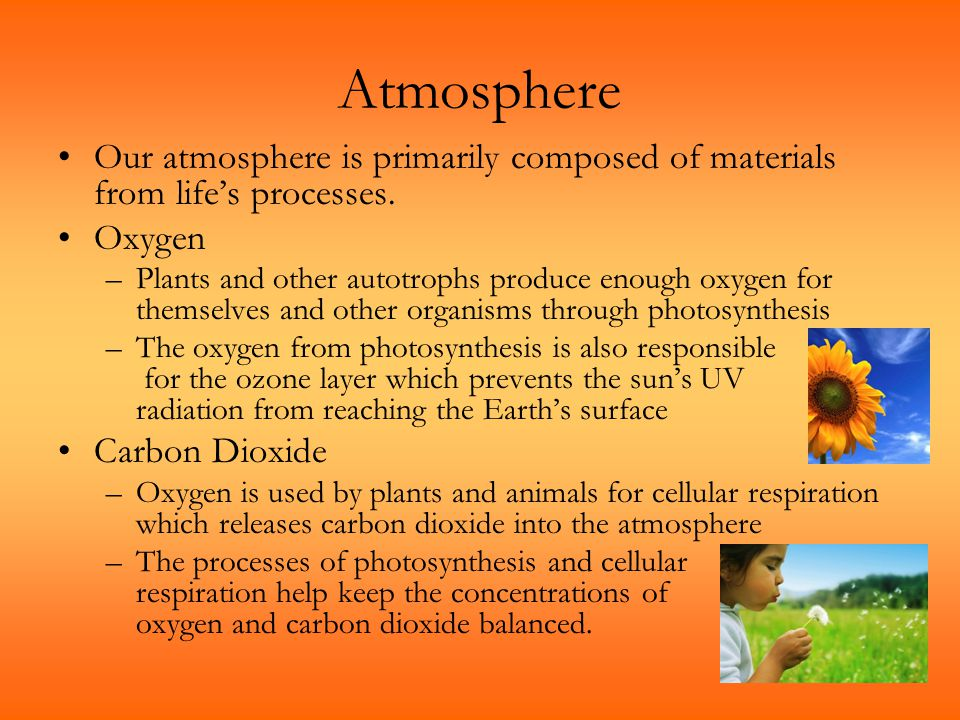 Atmosphere Our atmosphere is primarily composed of materials from life's processes. Oxygen –Plants and other autotrophs produce enough oxygen for them