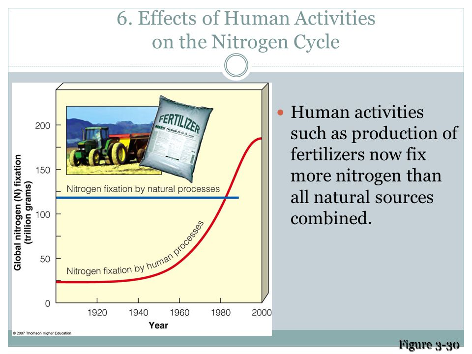 5. Human Alter the Nitrogen Cycle by: Adding gases that contribute to acid rain Adding nitrous oxide to the atmosphere through farming practices which