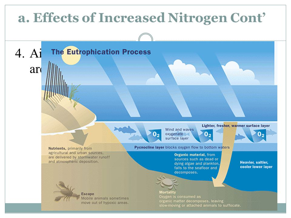 a. Effects of Increased Nitrogen 1.Loss of soil nutrients (Ex.
