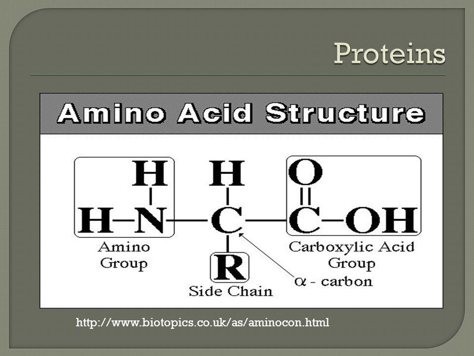 http://www.biotopics.co.uk/as/aminocon.html