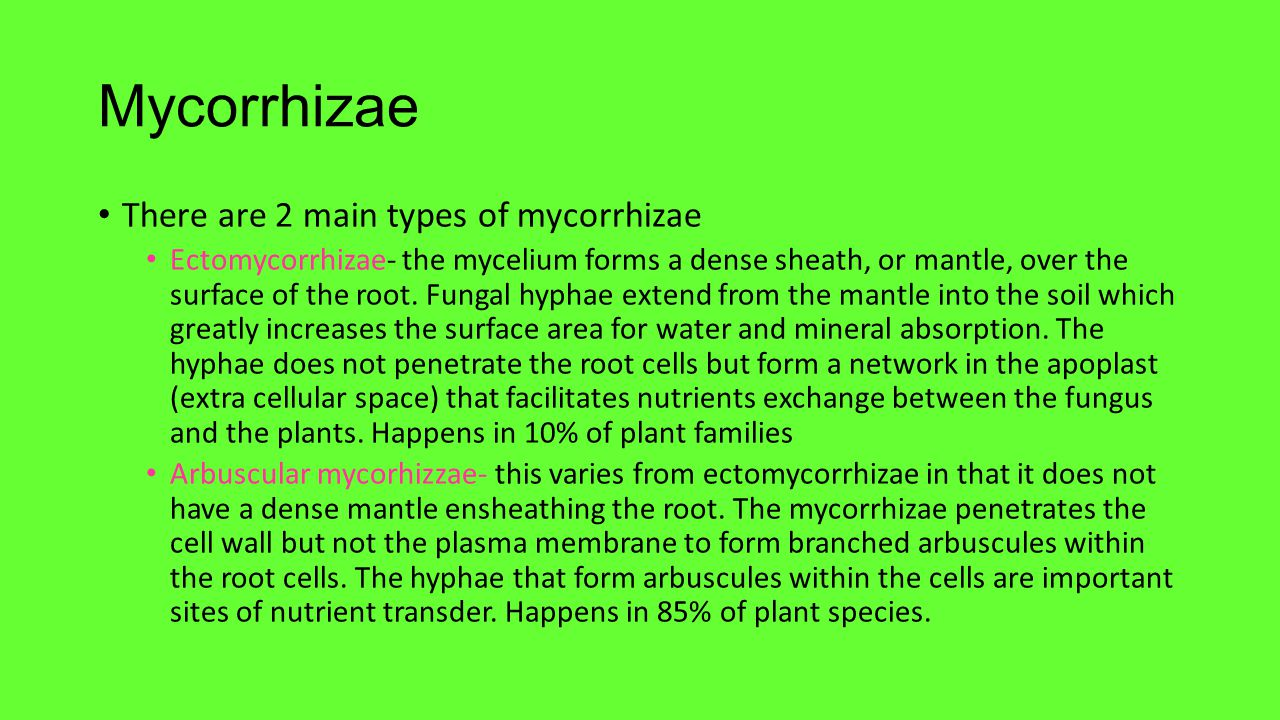 Mycorrhizae There are 2 main types of mycorrhizae Ectomycorrhizae- the mycelium forms a dense sheath, or mantle, over the surface of the root. Fungal