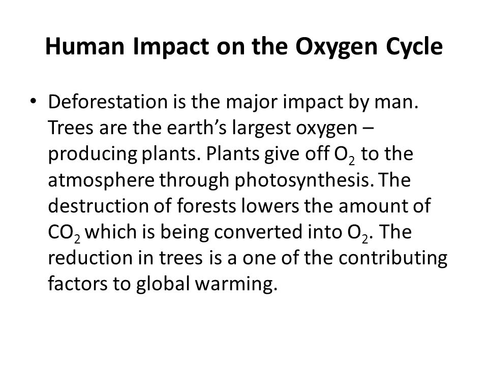 Human Impact on the Oxygen Cycle Deforestation is the major impact by man. Trees are the earth's largest oxygen – producing plants. Plants give off O