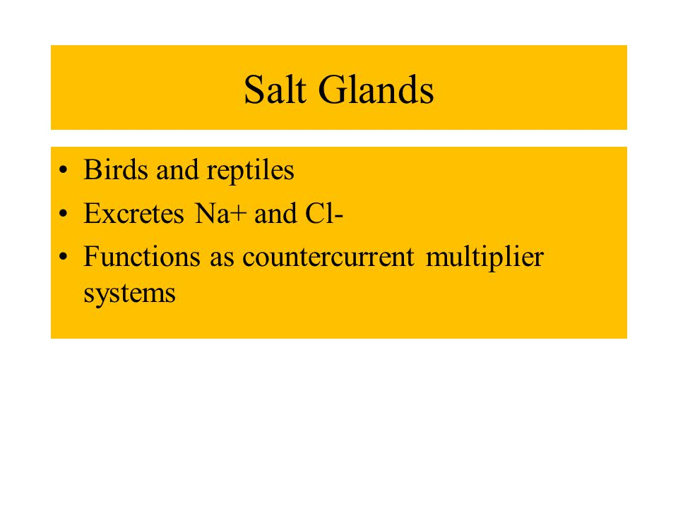 Salt Glands Birds and reptiles Excretes Na+ and Cl- Functions as countercurrent multiplier systems
