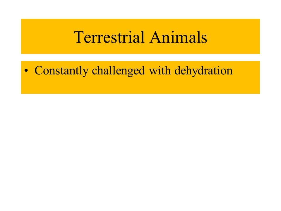 Terrestrial Animals Constantly challenged with dehydration