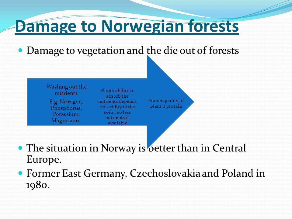 Damage to Norwegian forests Damage to vegetation and the die out of forests The situation in Norway is better than in Central Europe.