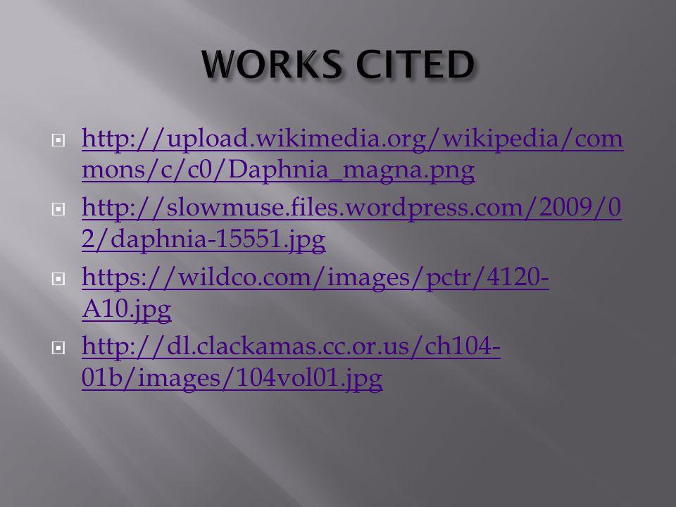  http://upload.wikimedia.org/wikipedia/com mons/c/c0/Daphnia_magna.png http://upload.wikimedia.org/wikipedia/com mons/c/c0/Daphnia_magna.png  http://slowmuse.files.wordpress.com/2009/0 2/daphnia-15551.jpg http://slowmuse.files.wordpress.com/2009/0 2/daphnia-15551.jpg  https://wildco.com/images/pctr/4120- A10.jpg https://wildco.com/images/pctr/4120- A10.jpg  http://dl.clackamas.cc.or.us/ch104- 01b/images/104vol01.jpg http://dl.clackamas.cc.or.us/ch104- 01b/images/104vol01.jpg