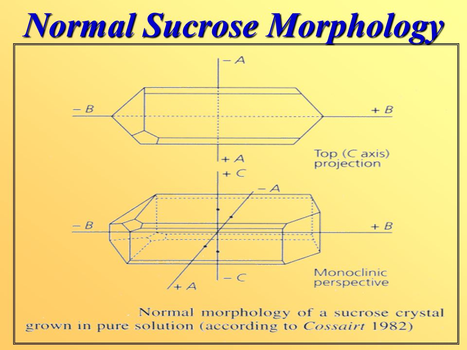 Normal Sucrose Morphology