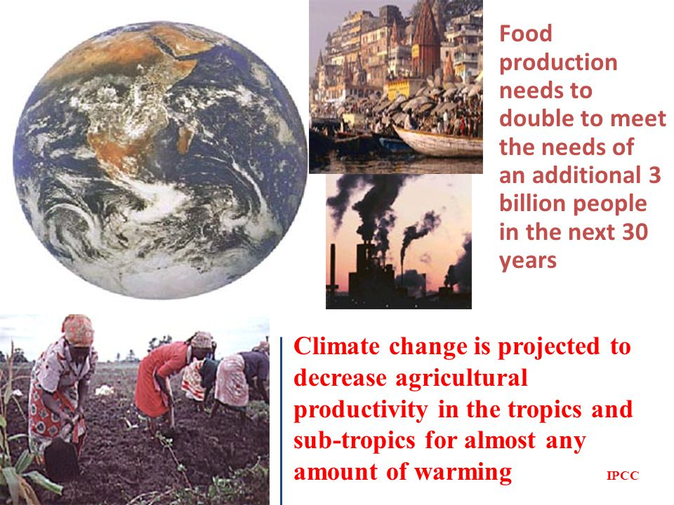 Food production needs to double to meet the needs of an additional 3 billion people in the next 30 years Climate change is projected to decrease agricultural productivity in the tropics and sub-tropics for almost any amount of warming IPCC