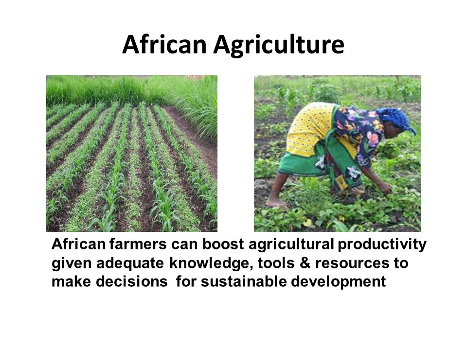 African Agriculture African farmers can boost agricultural productivity given adequate knowledge, tools & resources to make decisions for sustainable development
