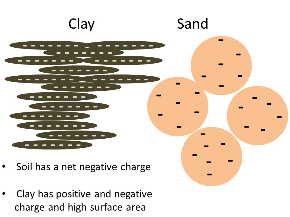 - - - - - - - - - - - - - - - - ClaySand - - - - - - - - - - - - - - - - - - - Soil has a net negative charge Clay has positive and negative charge and high surface area
