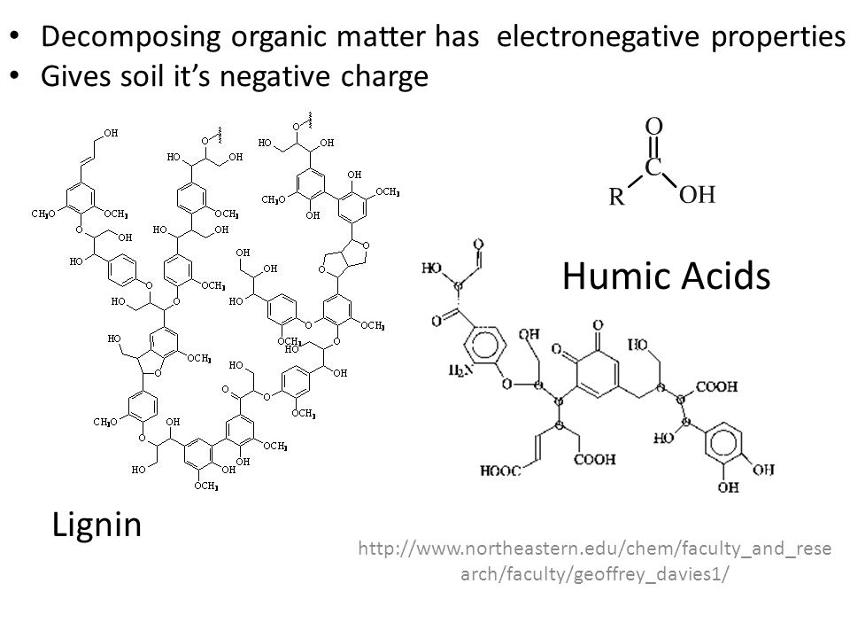 http://www.northeastern.edu/chem/faculty_and_rese arch/faculty/geoffrey_davies1/ Lignin Humic Acids Decomposing organic matter has electronegative pro