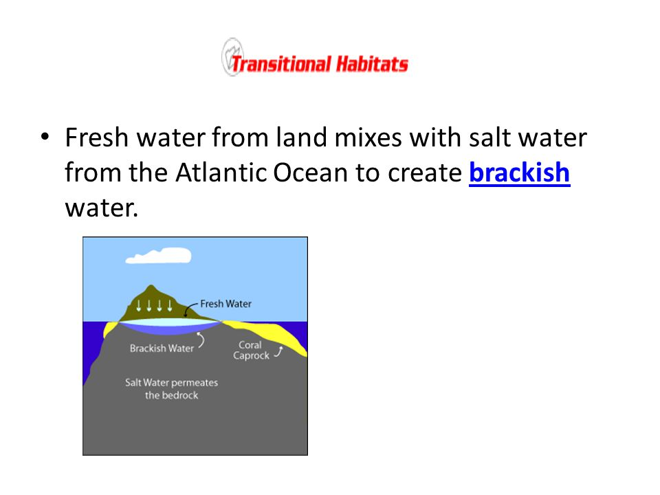 Fresh water from land mixes with salt water from the Atlantic Ocean to create brackish water.brackish