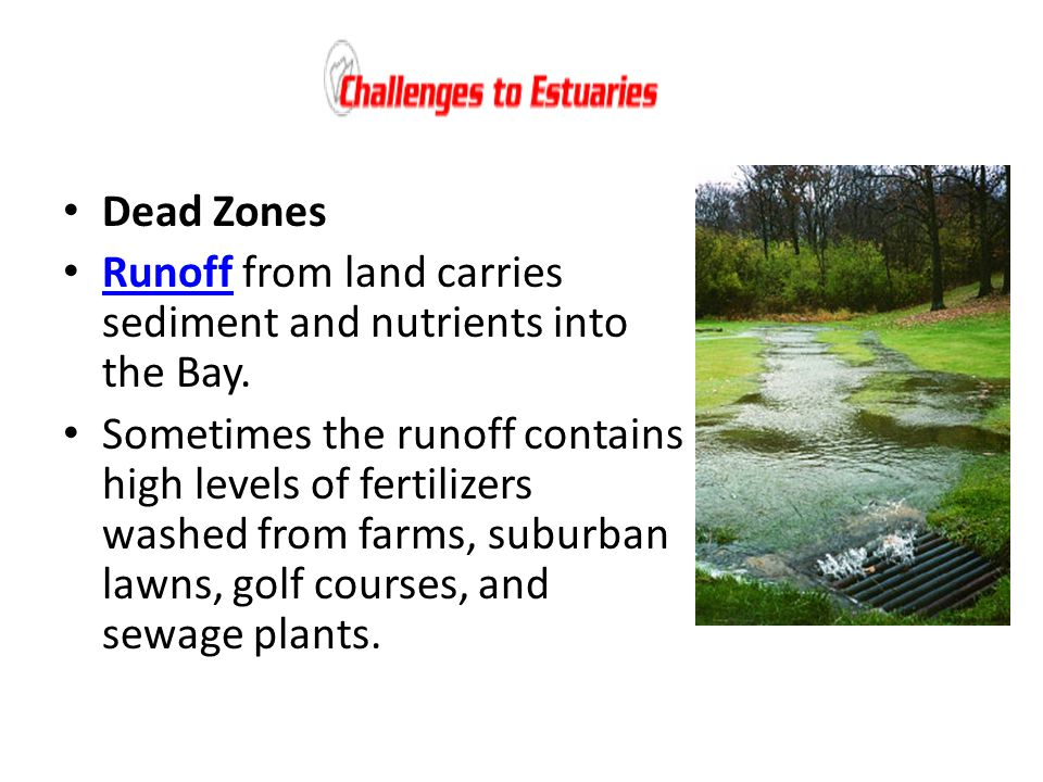 Dead Zones Runoff from land carries sediment and nutrients into the Bay.